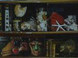 Le Cabinet de Curiosités du collège C.CLAUDEL